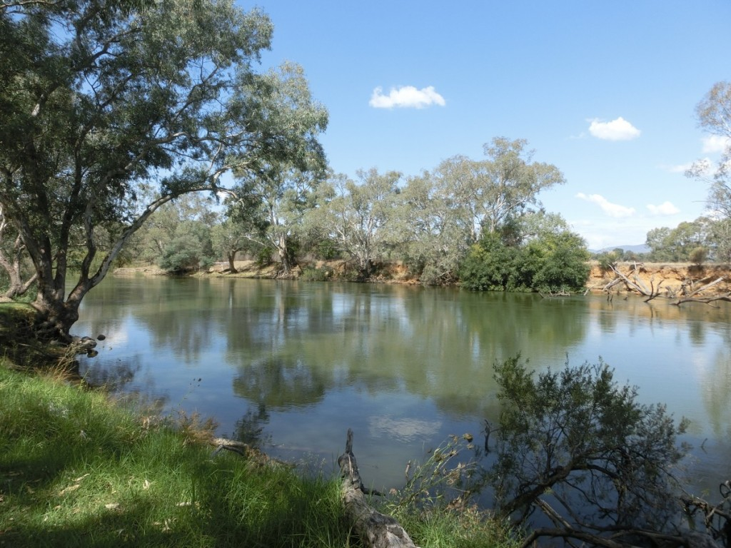 Peaceful and beautiful scenery along the Murray River.